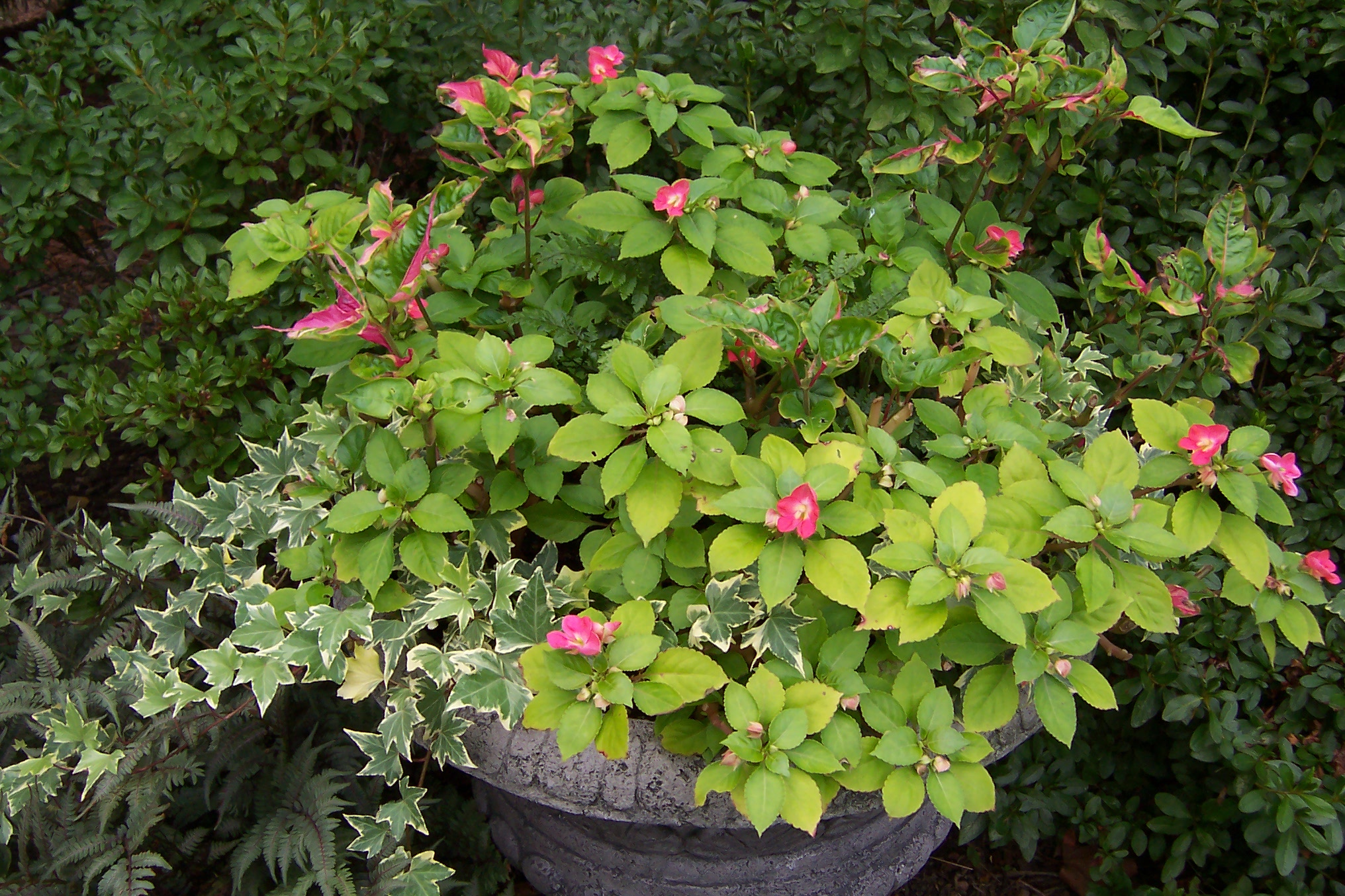 Fall container gardening - Container gardening ...