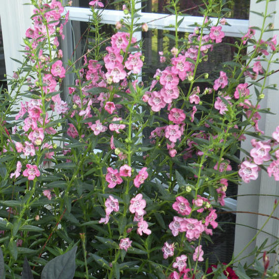 top ten container plants for record breaking hot summer